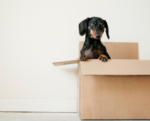 Dog, box, house move, storage