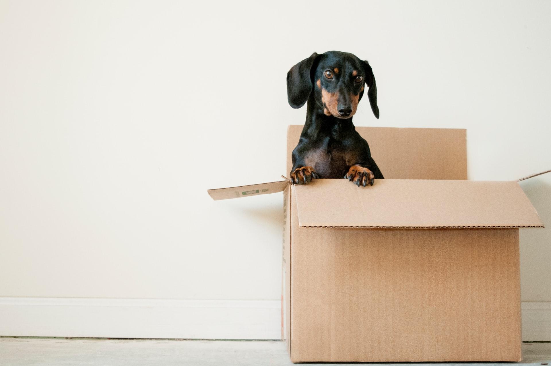 Dog, box, house move, storage